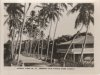 Coconut-Palm-Avenue-Eimeo-1951
